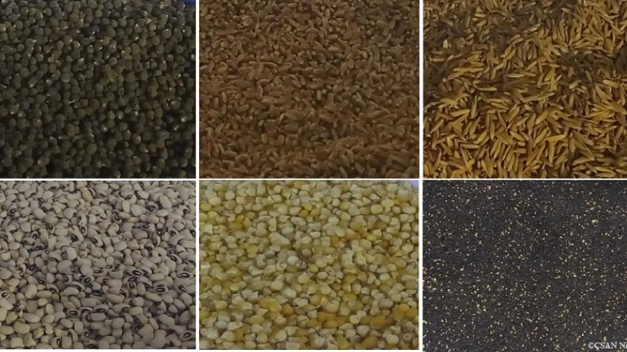 Les semences de gombo, blé, riz, niébé, maïs et oignon