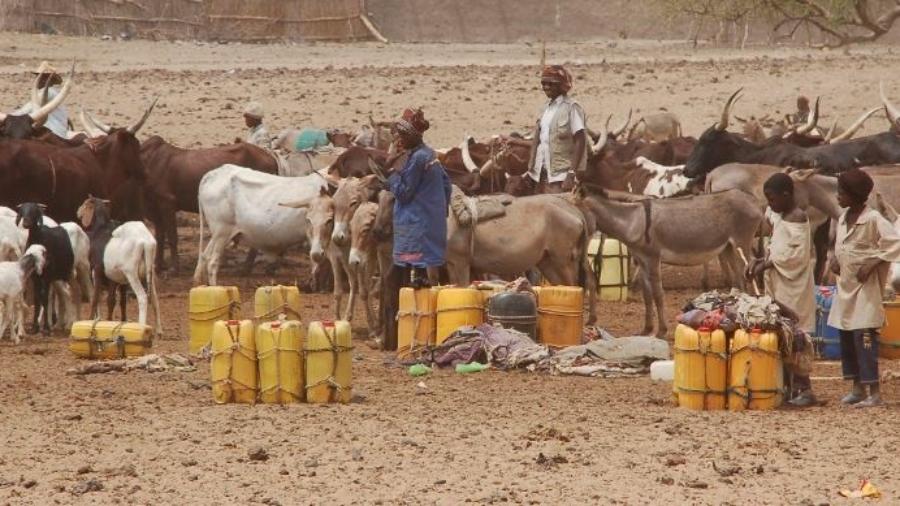 Ressources Animales au Niger