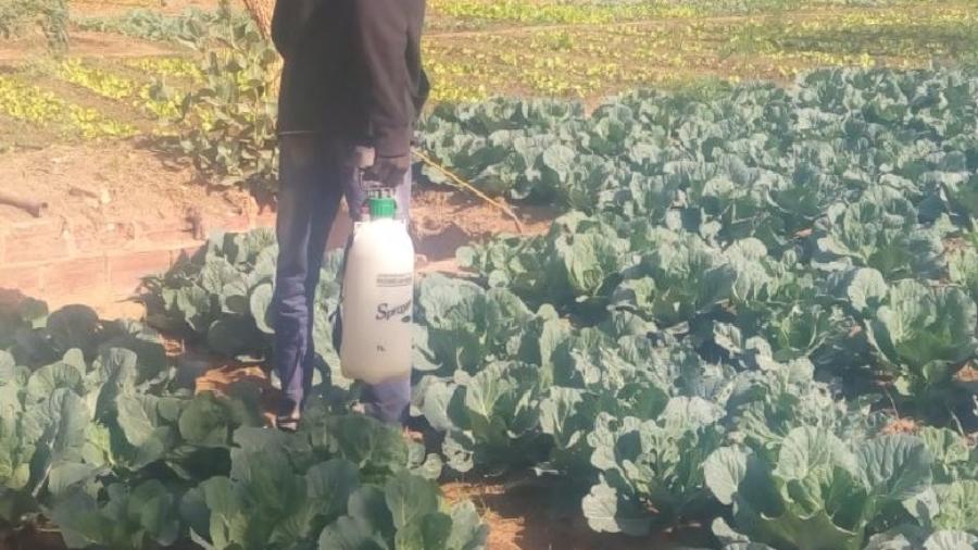 Un agriculteur entrain de faire un traitement pesticide dans un champ dans la ville de Niamey