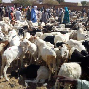 Marché à bétail dans la région de Maradi