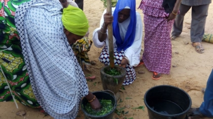 broyage de feuilles de neem