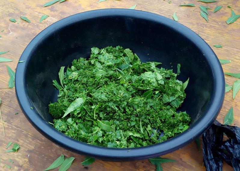 Broyat de feuille de neem préparé par des agriculteurs