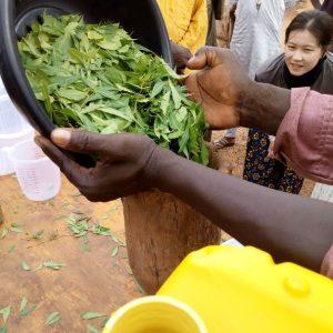 Préparation de biopesticide à base de feuilles de neem à Hamdallaye