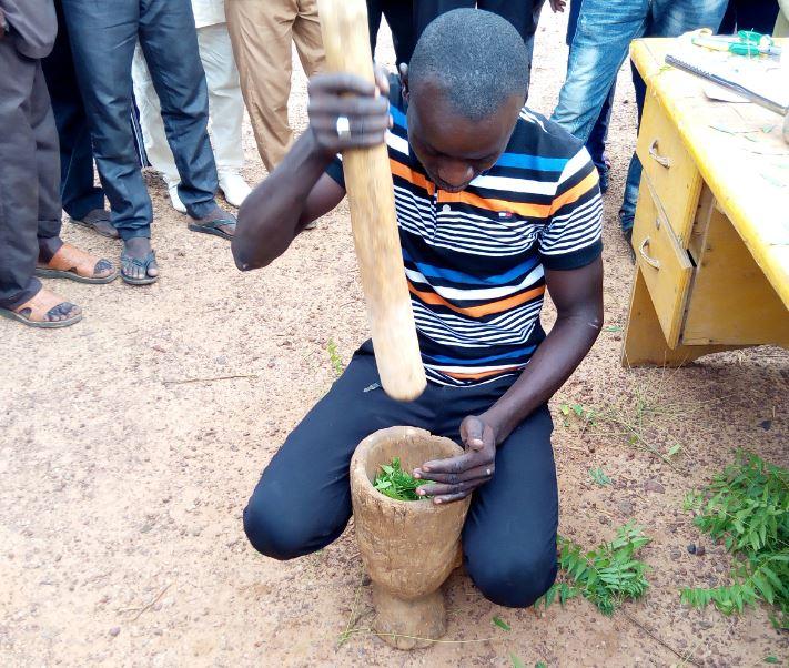 Producteur entrain de piler des feuilles de neem