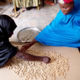 Séance de tri de l'arachide par membres de la coopérative Larewa lors de la formation hygiène sécurité des aliments gestion des entreprise