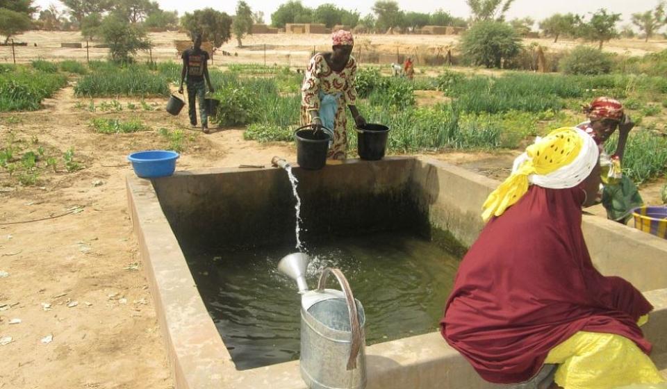 Methode manuel d'irrigation par des femmes