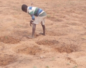 Enfant travaillant dans une exploitation de moringa