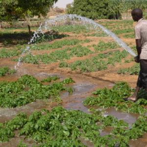 Water management bad practices