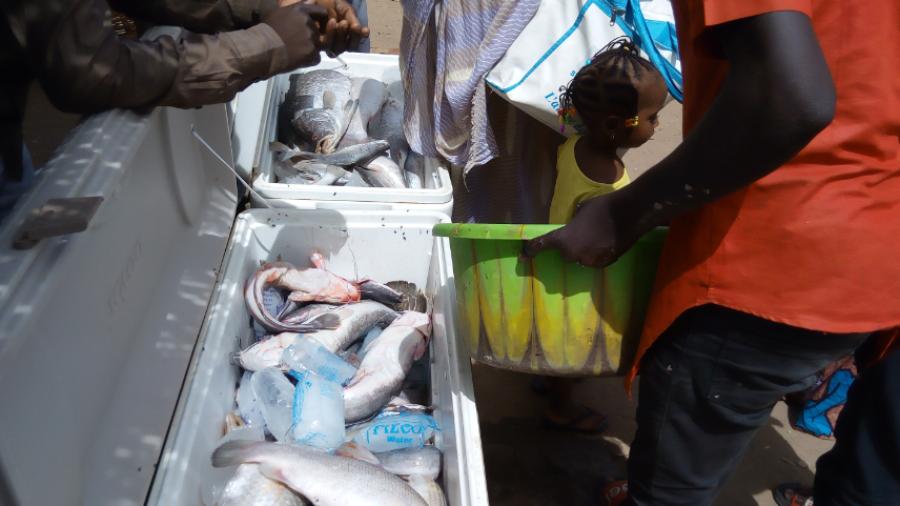 Des jeunes commerçants en train de vendre du poisson frais dans un marché à Maradi en 23 mai 2020